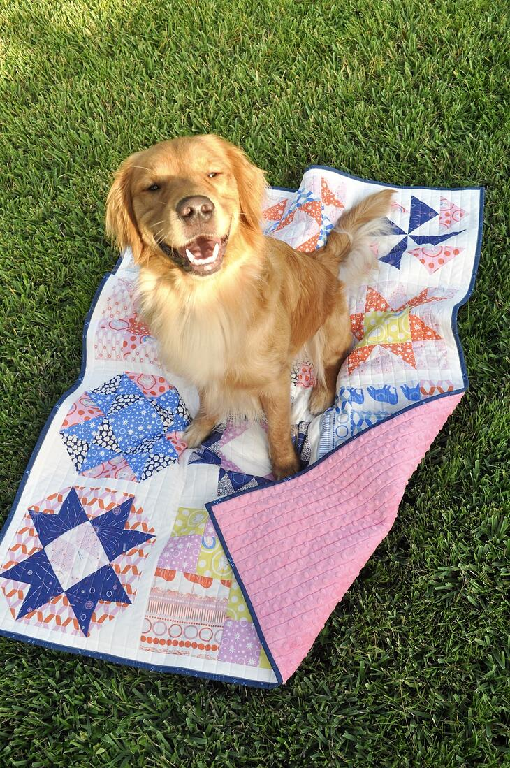 Golden Retriever, Beau, on Ring Toss FIGO Fabrics quilt sampler laid in grass